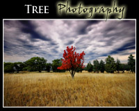Fine Art Tree Photography